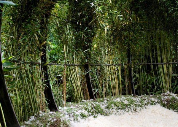 Jardin éphemère - Le Paradis 10