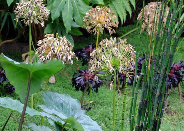 Luc ECHILLEY paysagiste - Les Angles - journée du patrimoine 9