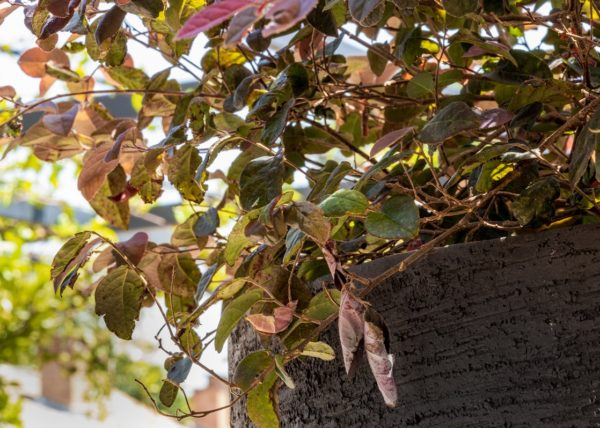 cezae-jardin-elegant-avignon (18)