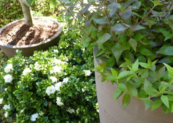 jardin jardins